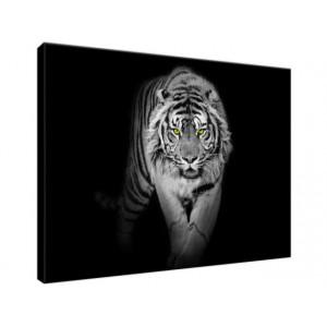 Tygrys w mroku 40x30