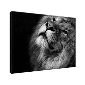 Srebrny lew 40x30