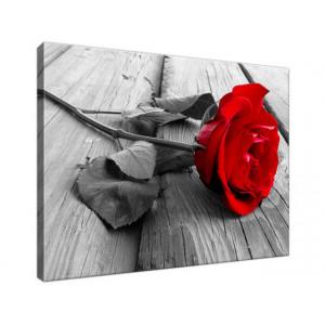 Czerwona róża 40x30