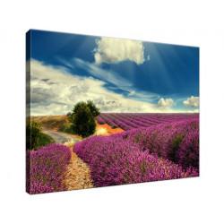 Lawendowy krajobraz 40x30