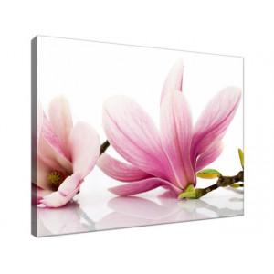 Różowe magnolie 40x30
