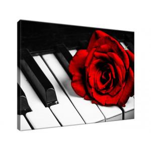 Róża na fortepianie 40x30