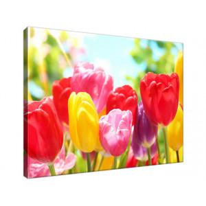 Żółty tulipan 40x30