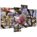 Kwitnące magnolie 40x30cm - Obraz na ścianę
